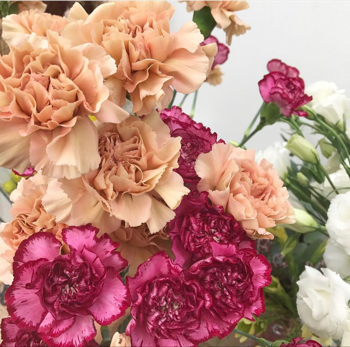 Wholesale Peach Carnation Flowers For Wedding In 2020 Wedding Flowers Carnation Flower Wholesale Flowers