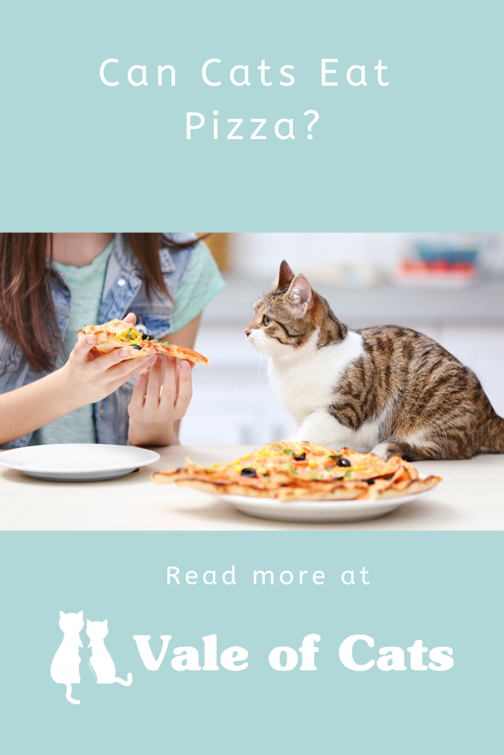 Can Cats Eat Pizza? Wellness cat food, Eat pizza, Best