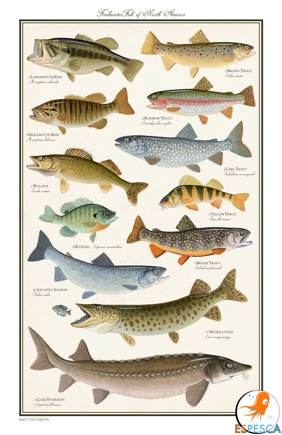 Infograf as de peces 35 peces pinterest pesca for Pozos para peces
