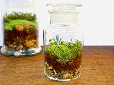 Moss Terrarium in Apothecary Jar - great gift idea for golfers!