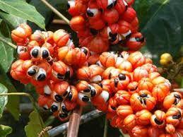 Resultado de imagen para plantas medicinales del peru