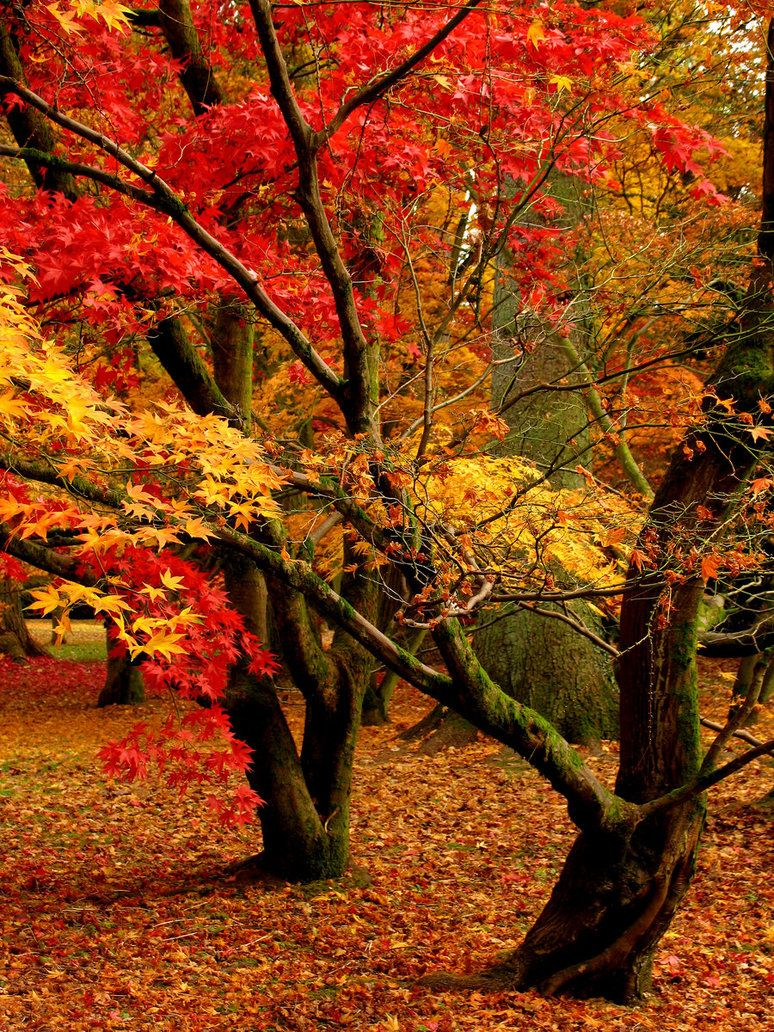 Autumn Beauty #autumnscenery