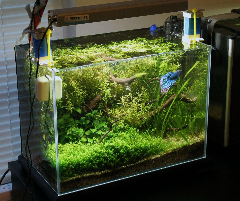 Betta house betta aquariums and betta fish for Planted fish tank