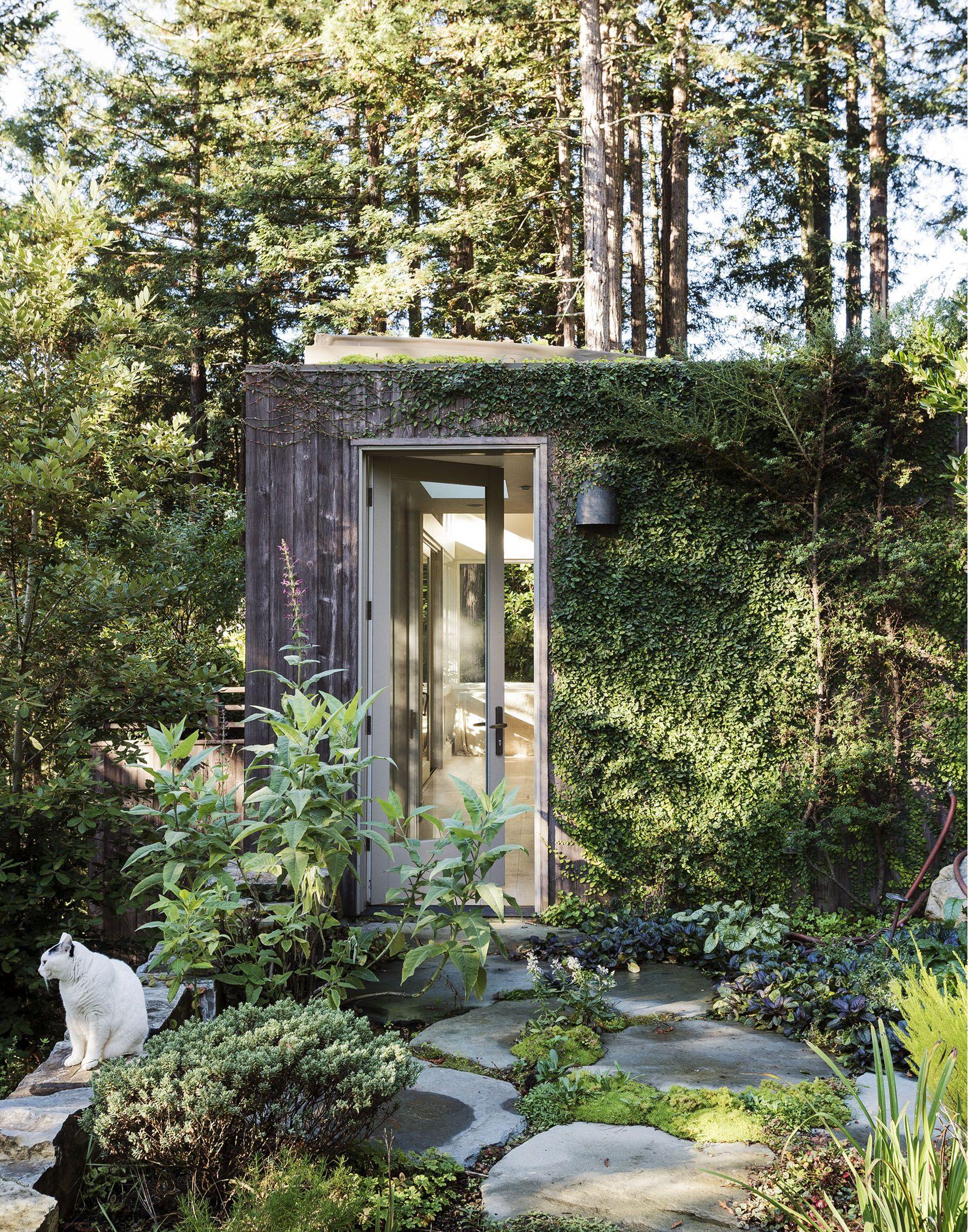 Fig Garden Yoga : garden, Creeping-fig-yoga-studio-matthew-williams-dsc-0208, Outdoor, Gardens,, Garden, Vines,, Creeping