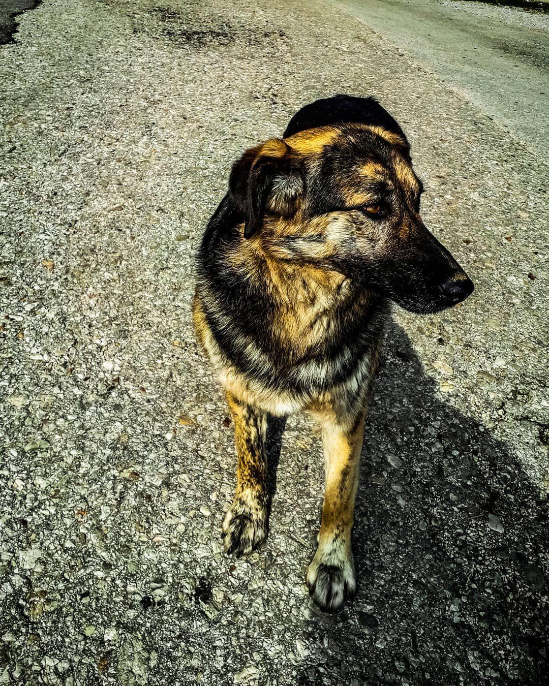 #morningwalk#monday#nowork#naturewalks#naturephotography#animalshots#animals_captures#dogstagram#dogs#dogslife#doglifestyle#streetdog#nicedog#lovedogs#betterthanpeople#