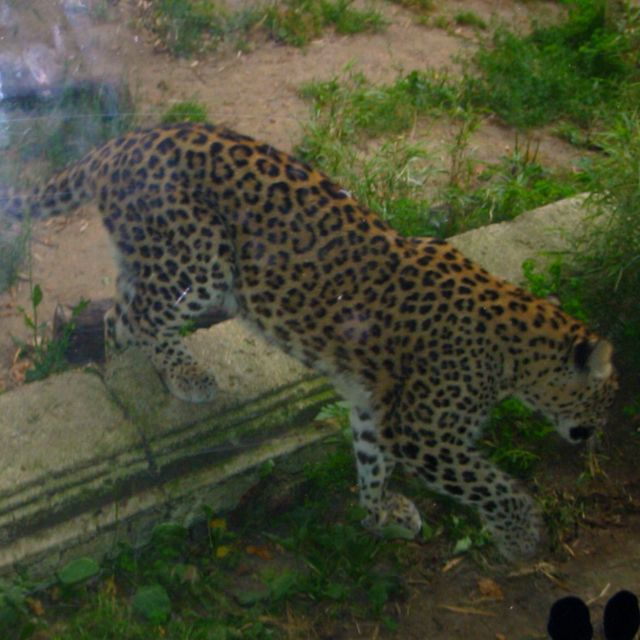 Hannover, Zoo