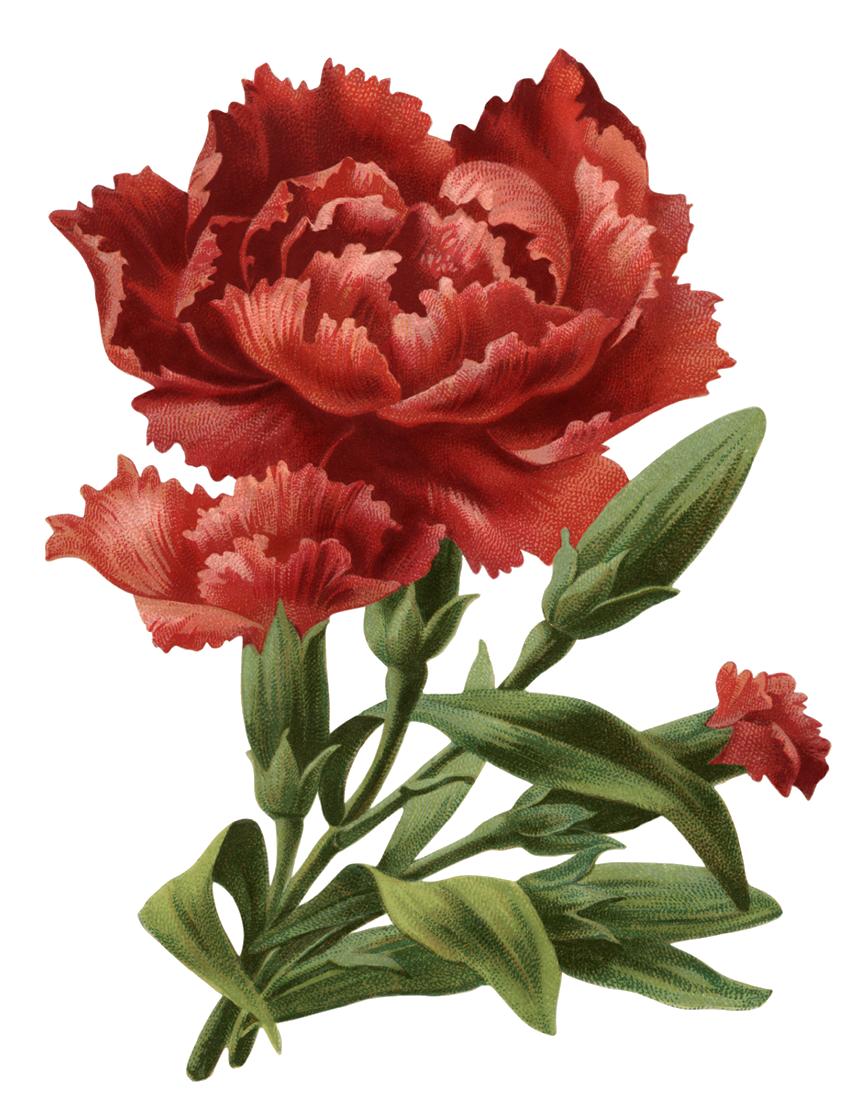 Картинки анимация цветы гвоздика