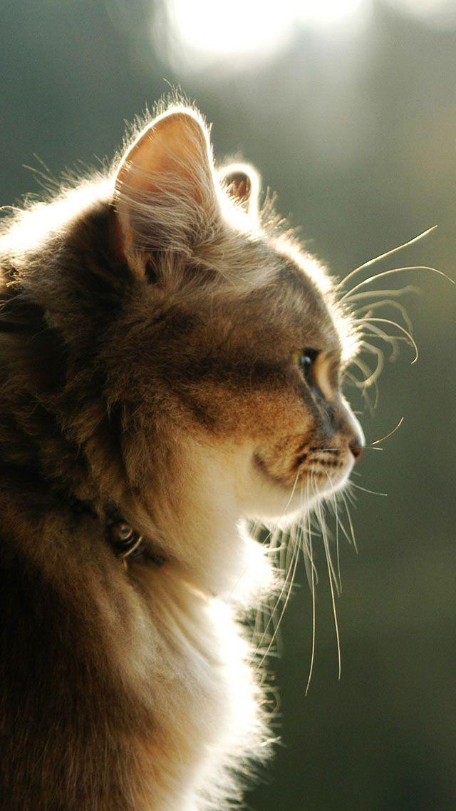 Beautiful Image By What2ver Kitten Wallpaper Kittens Cutest Cute Cat Wallpaper