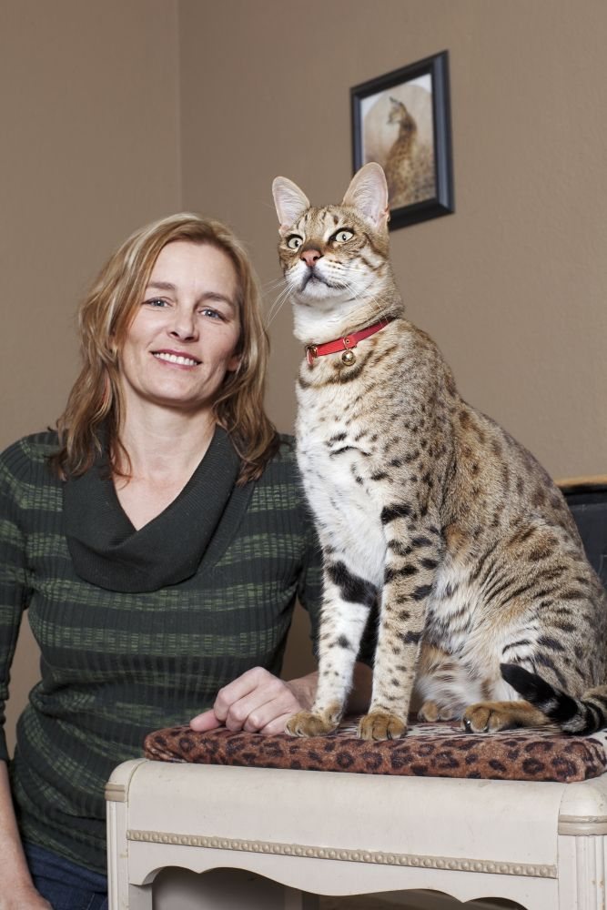 You Won T Believe These 19 Giant Animals Exist Giant Animals National Cat Day Cats