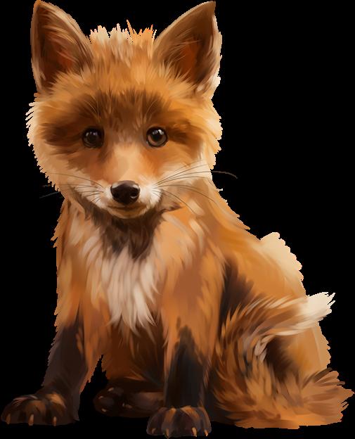 Fox tube xx