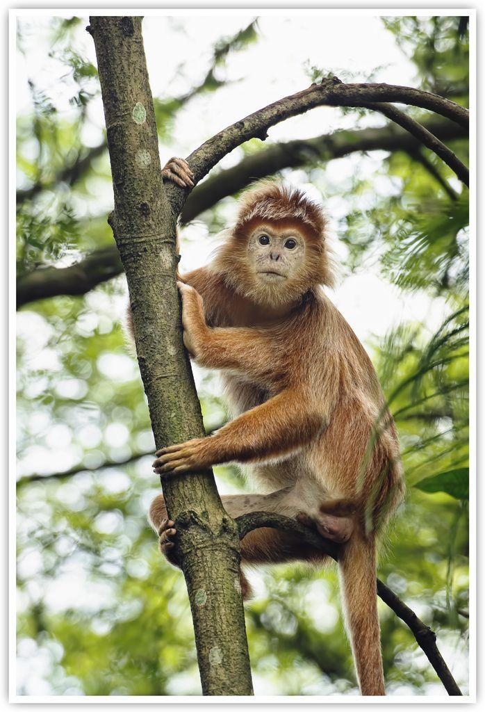 Unknown Monkey By Vin Psk Animals Beautiful Animals Wild Cute Animals