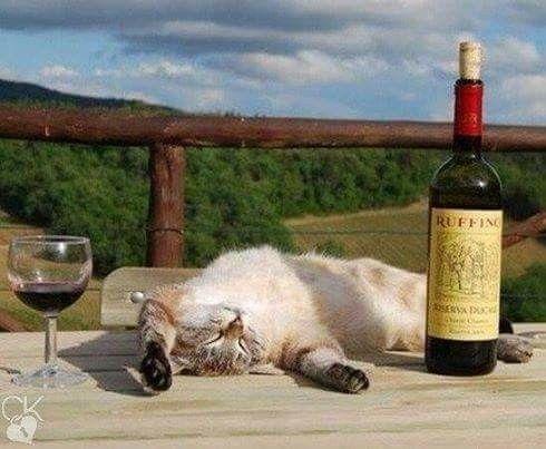 Happy cat & wine.