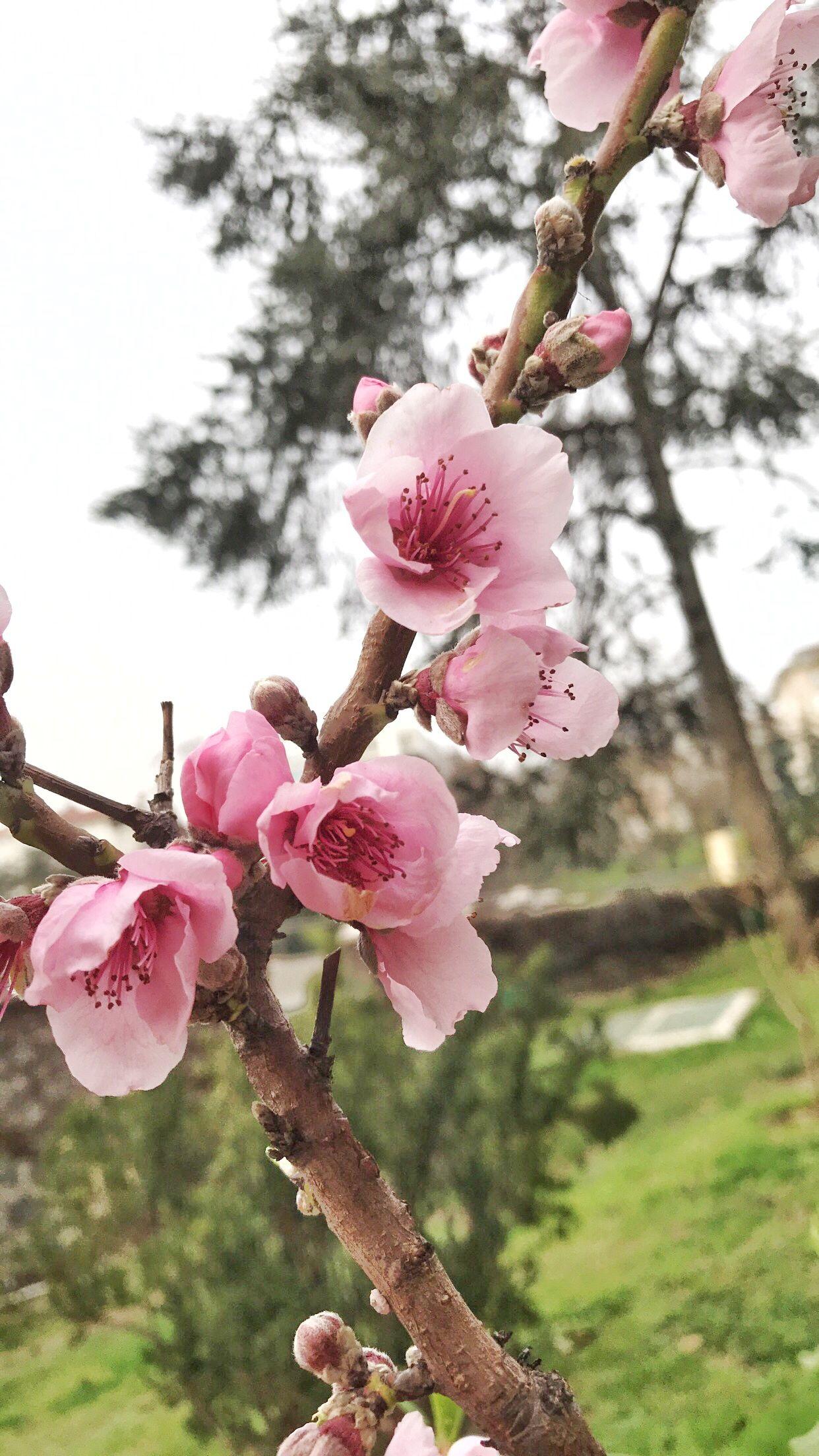 Pin By بثينة الكواري On ورد الربيع Flowers Photography Flowers Rose