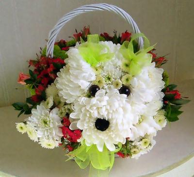 Perrito Con Crisantemos Mascotas Florales Rosas Y