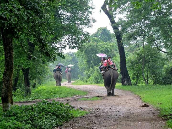 Kaziranga#wildlife#tour#assam#northeastindia#elephant#safari