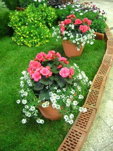 Ogrodnik Amator Uprawa Ogrodu Galeria Ogrodowa Zdjecia Ogrodow Flowers