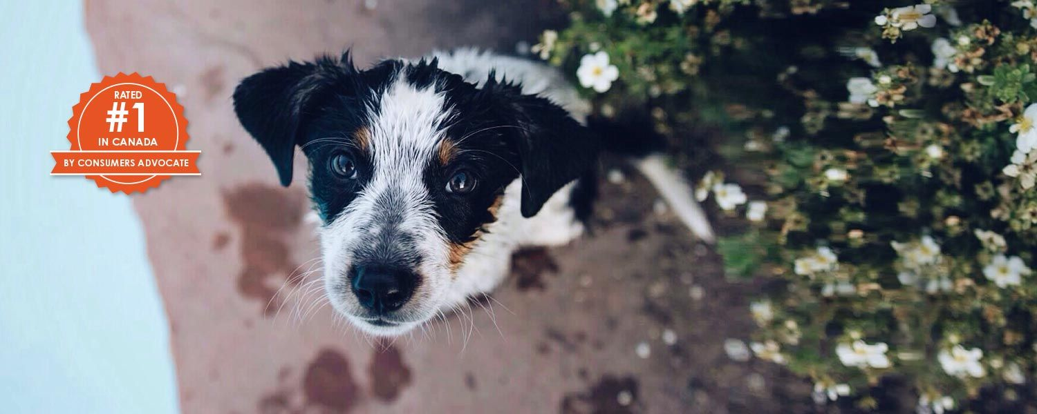 Pet Insurance for your Dog or Cat Trupanion Dog