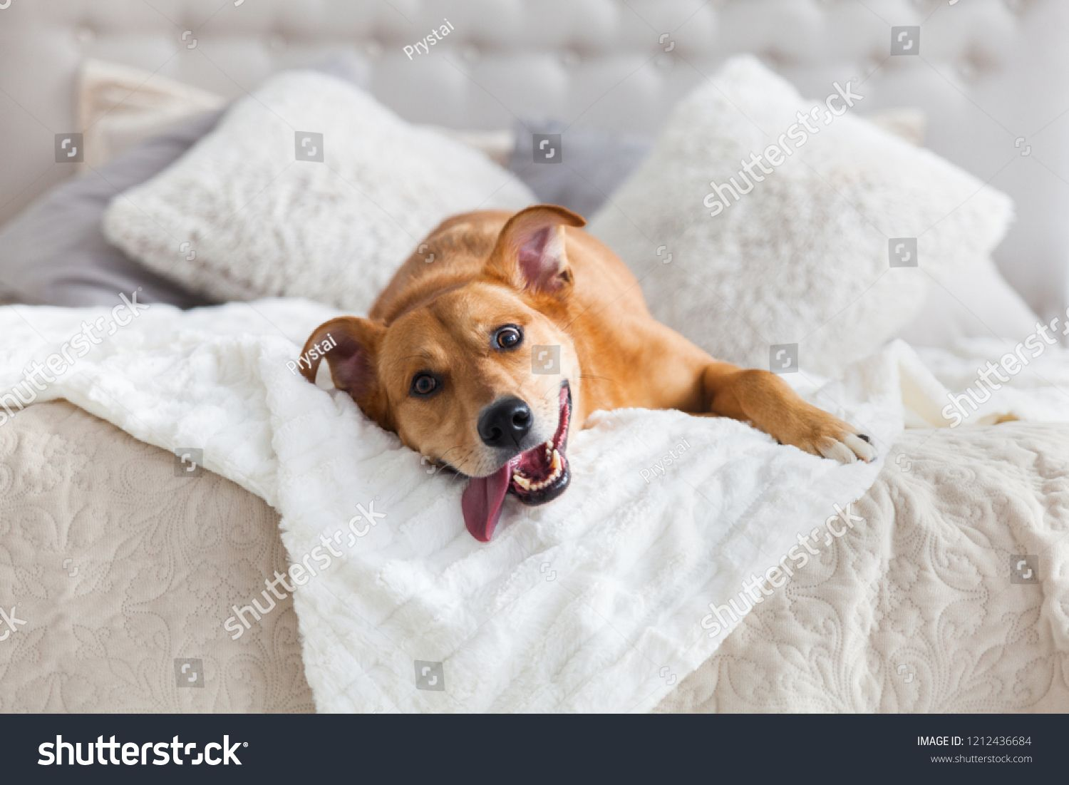Happy Ginger Mixed Breed Dog In Luxurious Bright Colors Scandinavian Style Bedroom With King Size Bed Pets Friendly Pet Friendly Hotels Dog Breeds Mixed Breed