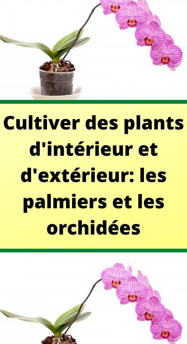 Cultiver Des Plants D Interieur Et D Exterieur Les Palmiers Et Les Orchidees Palmiers Culture Des Orchidees Cultiver