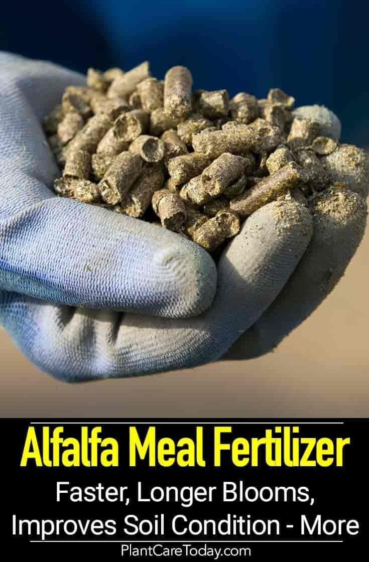 Meal Fertilizer: Using Organic Alfalfa Garden Fertilizers Alfalfa Meal Fertilizer: Using Natural Organic Alfalfa Garden FertilizersAlfalfa Meal Fertilizer: Using Natural Organic Alfalfa Garden Fertilizers