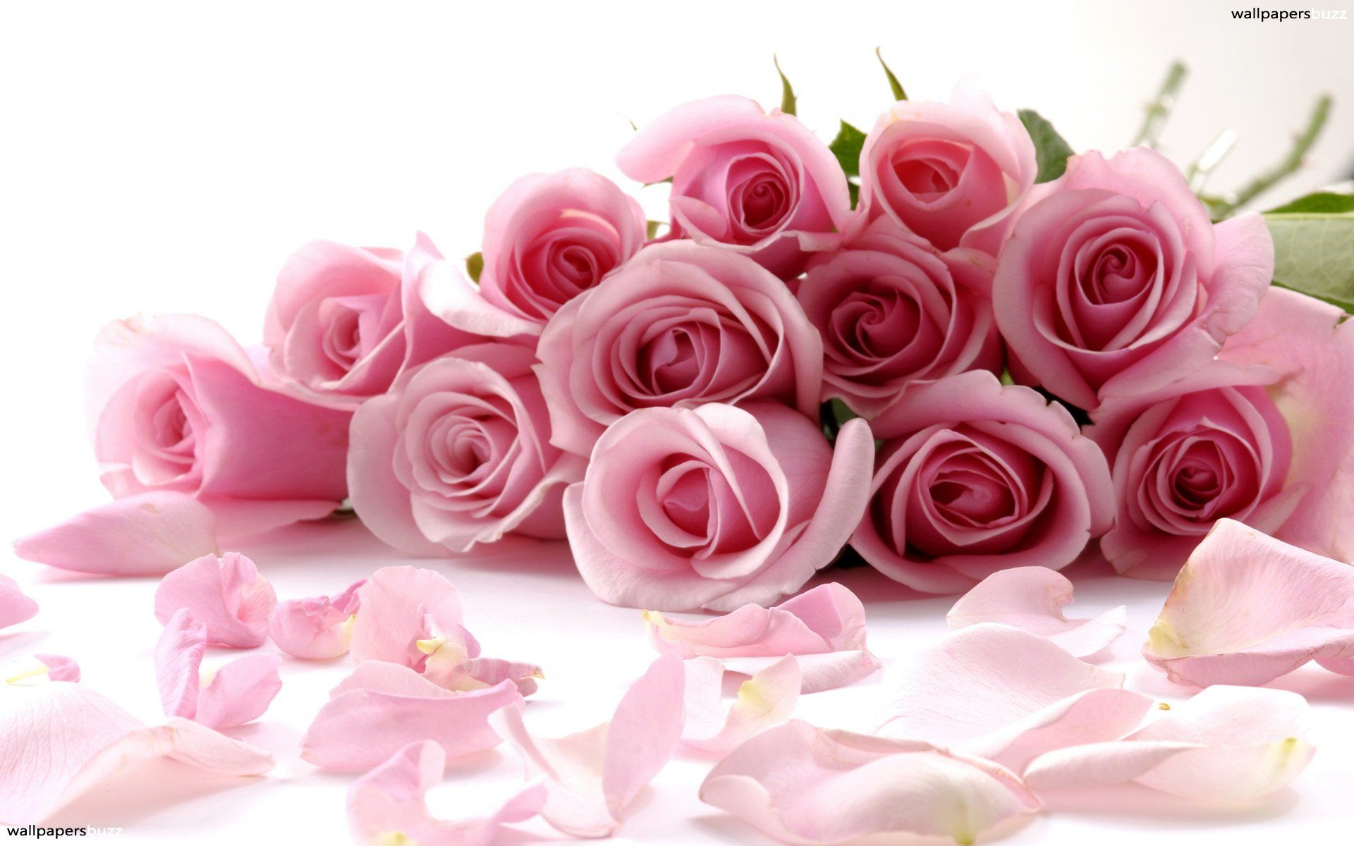 The Meaning Of The Color Of Roses~Pink-(Happiness, Elegance, Romance ...