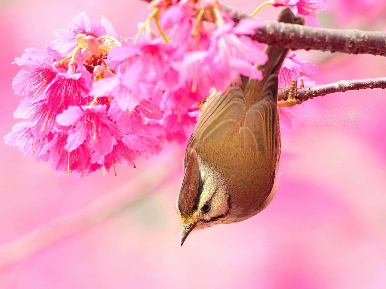 Beautiful Birds Wallpapers Birds Desktop Wallpapers Beautiful Bird Wallpaper Beautiful Birds Birds