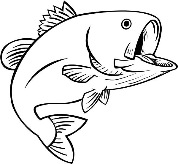 Best Bass Fish Outline 18264 Fish Coloring Page Coloring Pages