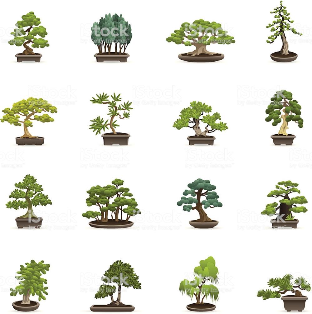 Illustration Of Different Bonsai Trees Bonsai Tree Tree Illustration Bonsai