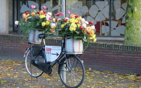 Zwolloe, bloemen fiets