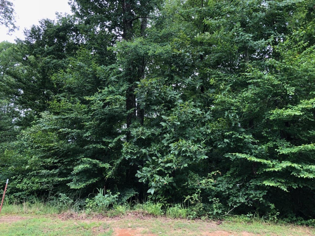 cedar hill tn homes for sale