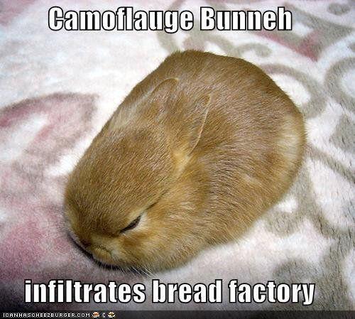 Camo Bunny - incoming :)) #bunnycrew To cute.