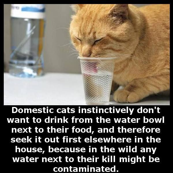 #water for cats