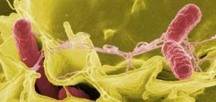 20++ Ciri ciri e coli ideas in 2021