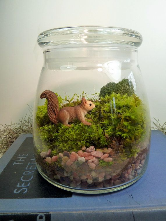 Terrarium, Large VIBE Jar , Squirrel, Moss.  Great for HOME or OFFICE. Nice Unusual Gift. Terrariums by mossterrariums on Etsy. on Etsy, $32.50