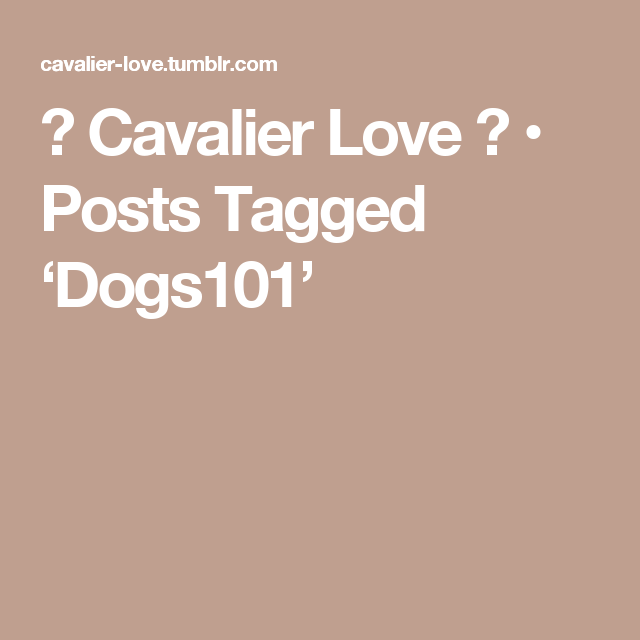 ♥ Cavalier Love ♥ • Posts Tagged 'Dogs101'