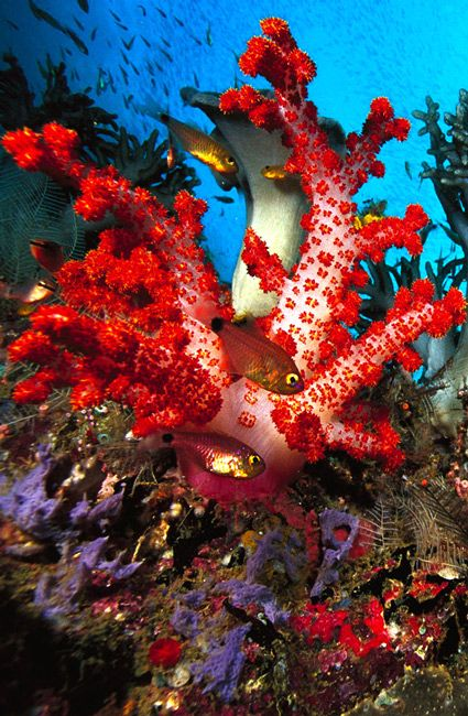 Beautiful Under Sea Animals Desktop Wallpapers Download Animals Hd 1080p Computer Wallpaper Desktop Wallpapers Desktop Background Pictures Desktop Wallpaper