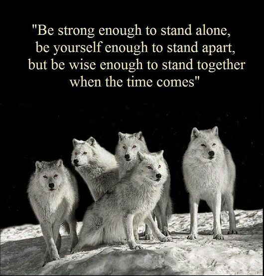 Strong\' Family Bond | Wolf quotes, American quotes, Native ...