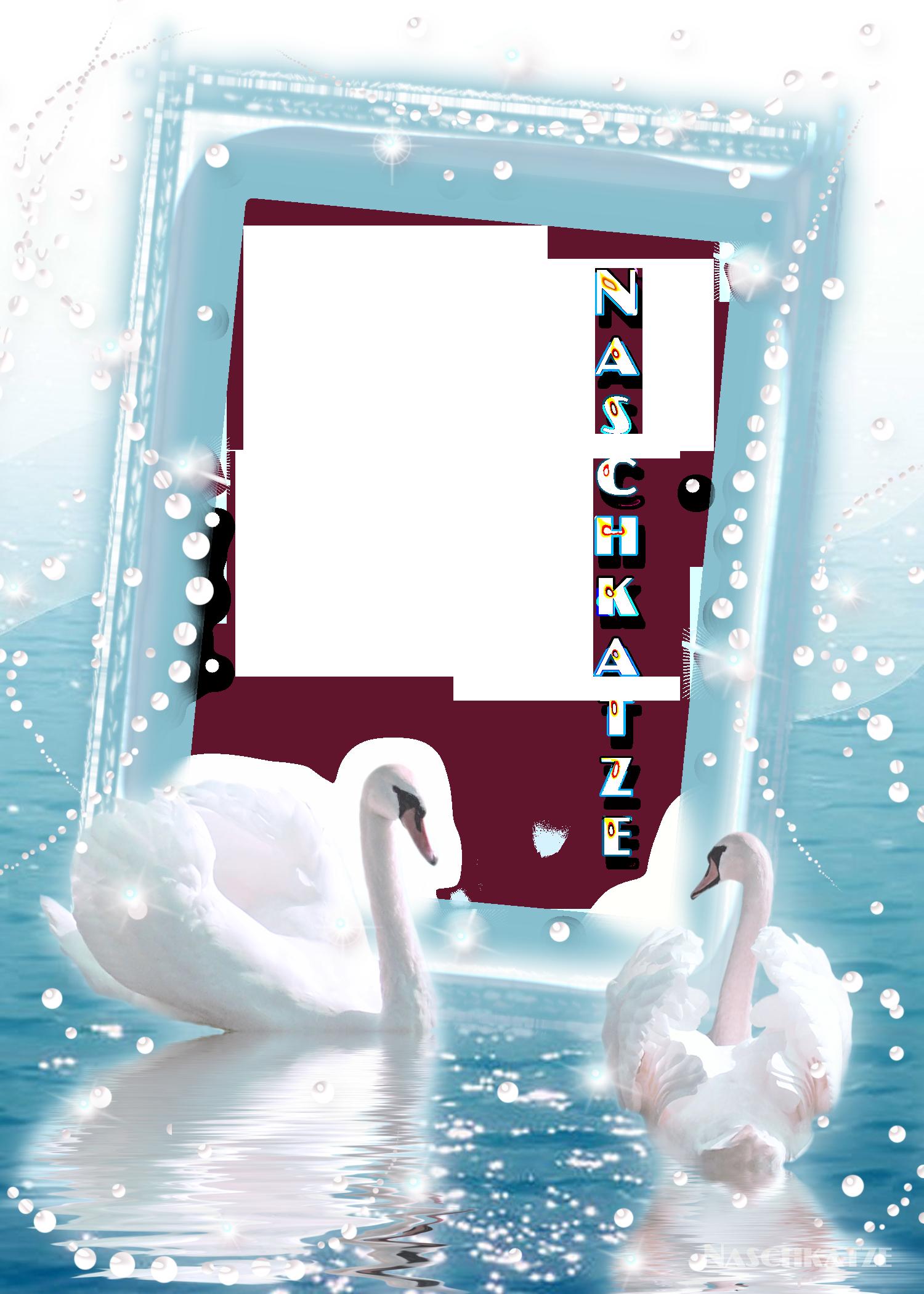 Лебеди для свадебной открытки