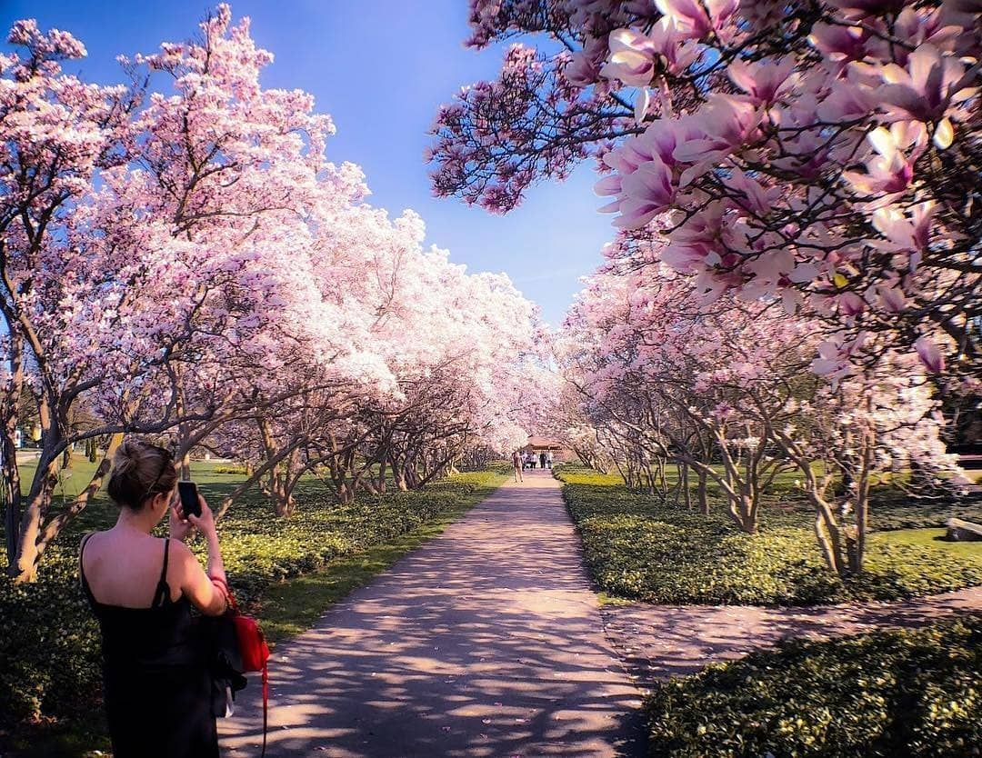 Ontario Canada On On Instagram Niagarafallstourismcanada In Just About A Month These Beautiful Pink Tr Long Blooming Perennials Pink Trees Bloom