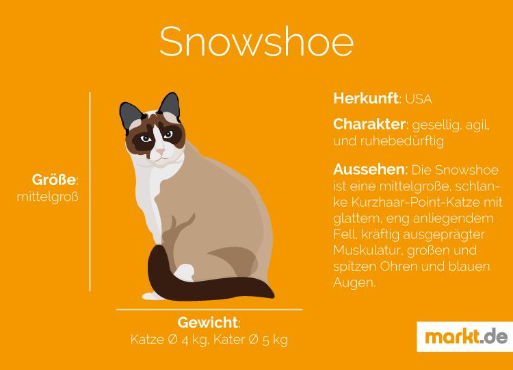 Snowshoe Katzen Katzen Rassen Katzenrassen