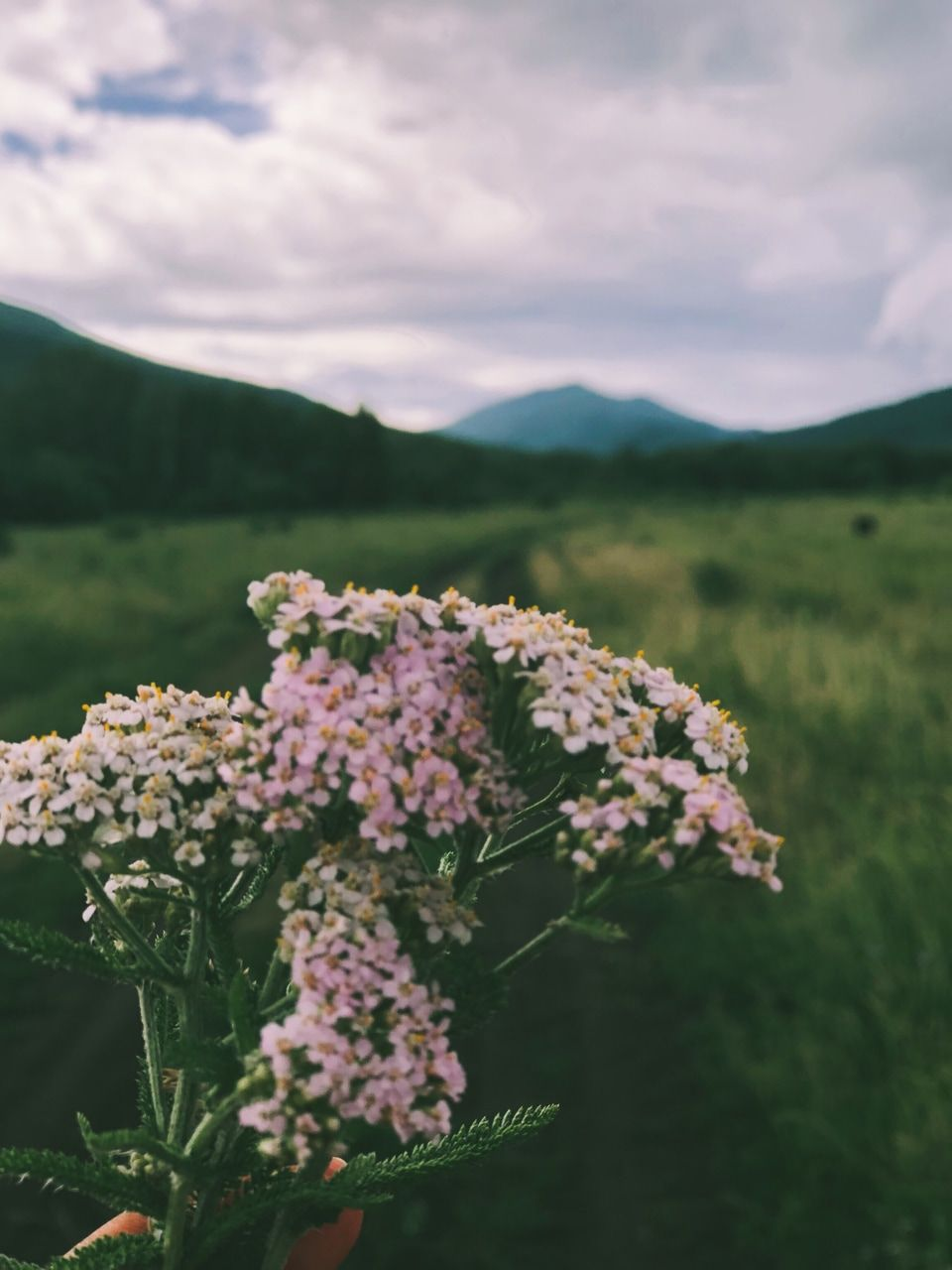 Pin Oleh Yaya Nurizky Di Nature Fotografi Alam Bunga Perjalanan