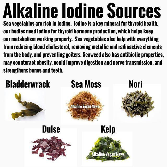 Alkaline Vegan News (@alkaline_vegan_news) • Instagram