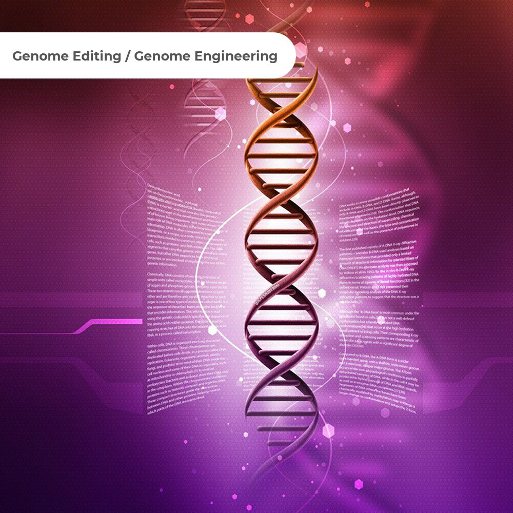 Genome Editing Genome Engineering Market Forecast To 2030 Biotechnology Marketing Trends Contract Research Organization