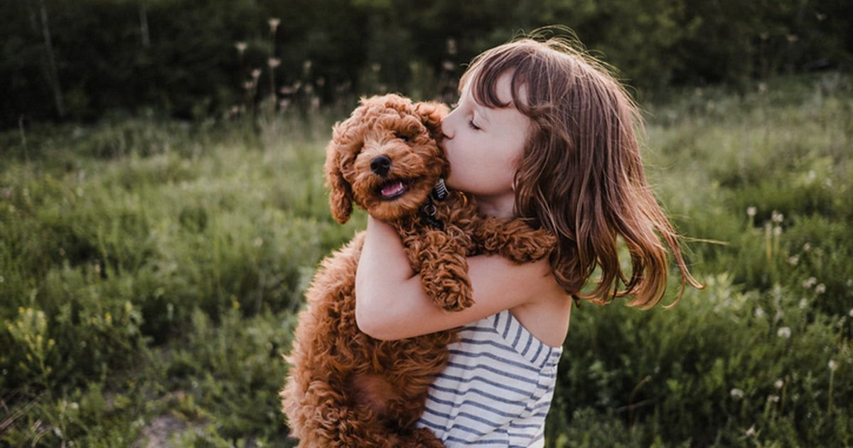 Cheap Dogs Top 10 Budget Friendly Pooches Care Com White Bichon Frise And Brown Miniature Poodle Stock Image Ke In 2020 Girl Dog Names Popular Dog Names Girl And Dog