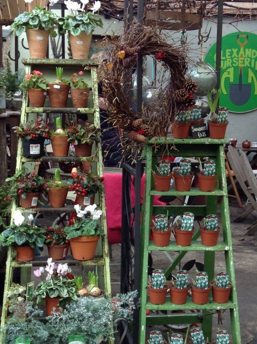 Local Nursery To Be Explored Garden Center Displays Plant