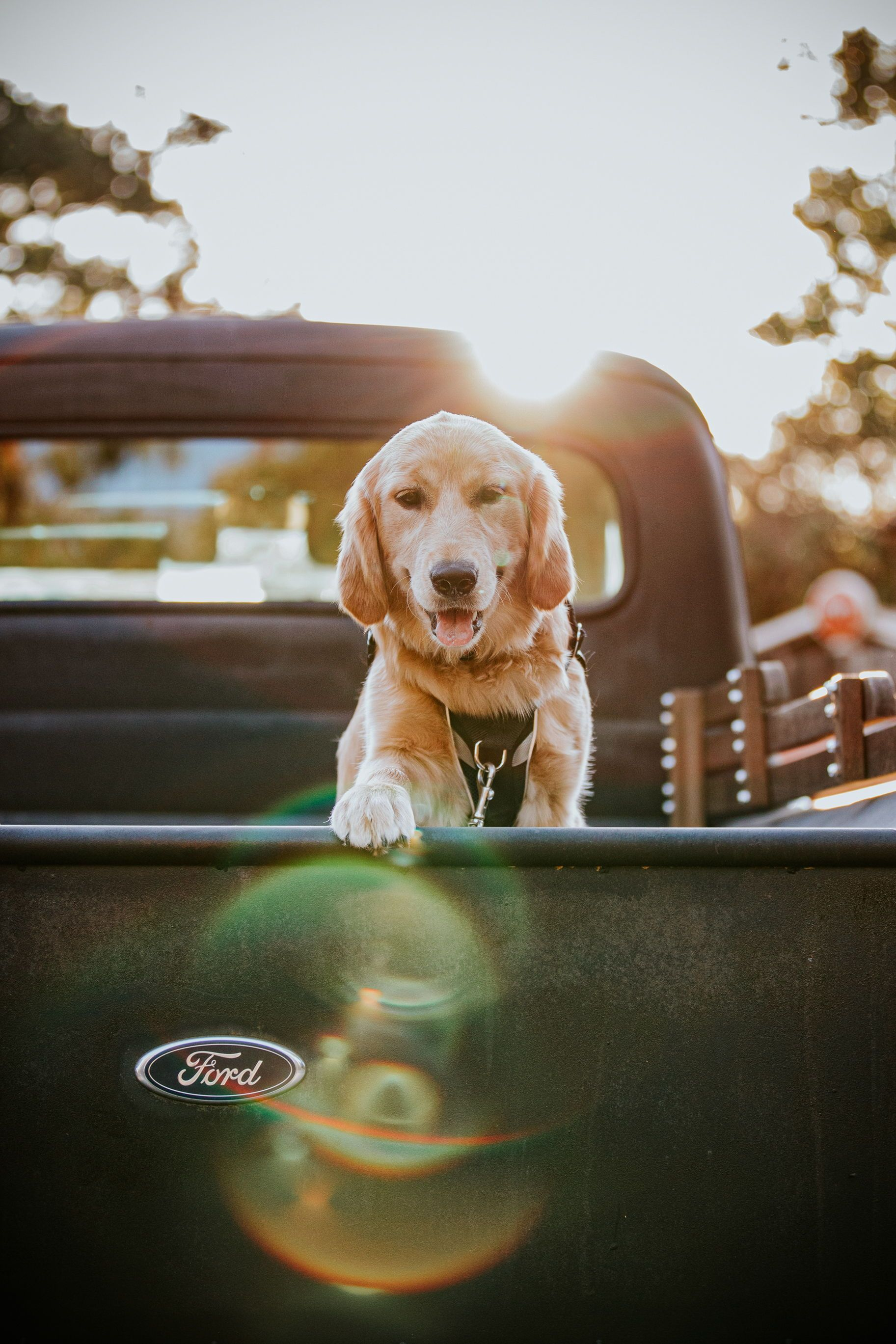 Cute Dog Of Honor Wedding Photo In A Vintage Truck At Golden Hour Sunset In 2020 Wedding Photos Poses Puppy Pose Romantic Photos