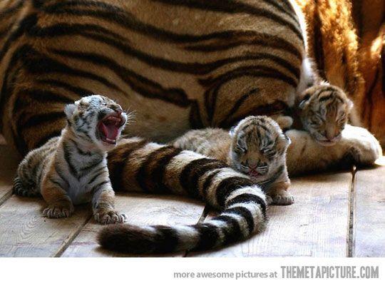 The tiniest roar