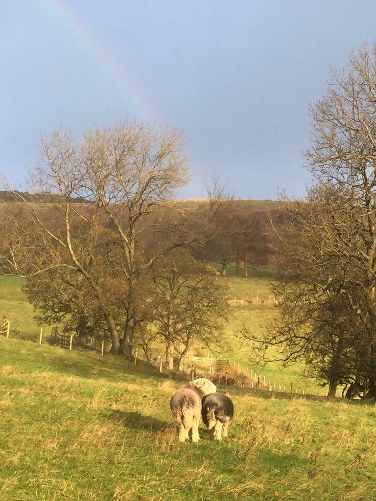 """Herdwick Shepherd on Twitter: """"Sheep at it under a rainbow https://t.co/vlqjjn2Xtk"""""""