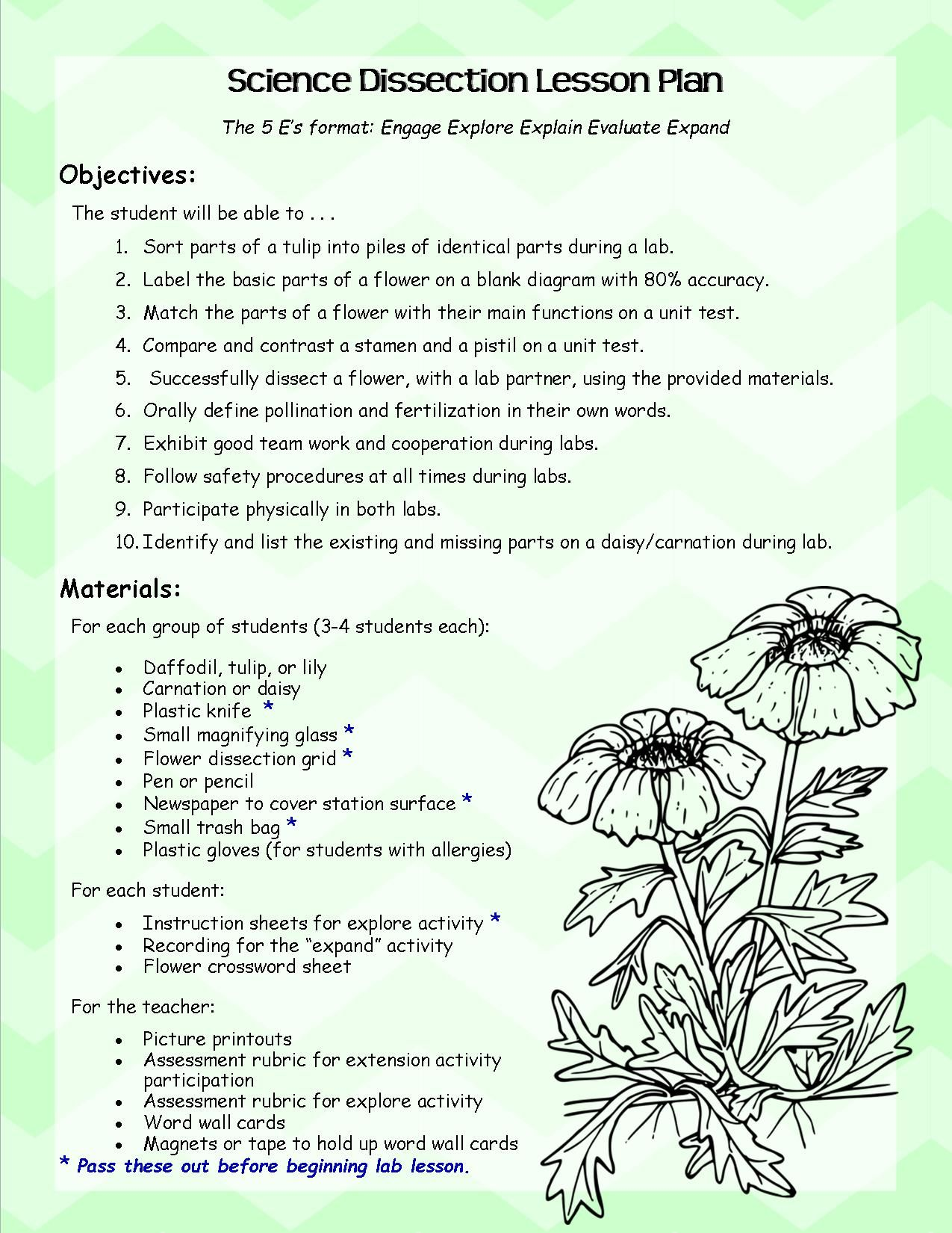Flower Dissection Lab Worksheet Middle School