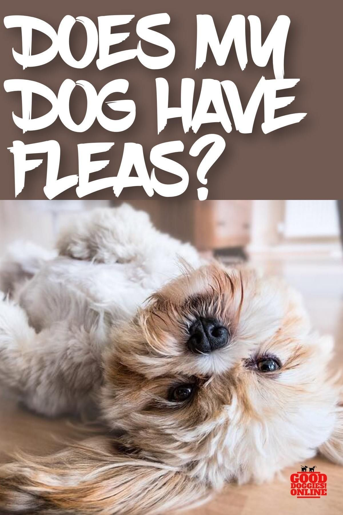 Does my dog have fleas 5 signs to know it dog care